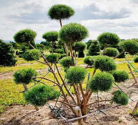 GartenBaumschule Lux